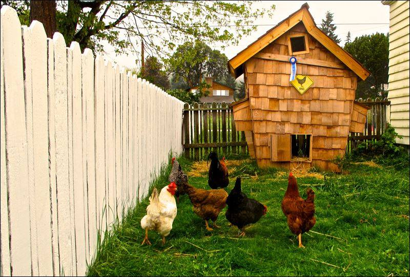 8 coolest coops in the entire world for Cool chicken coop plans