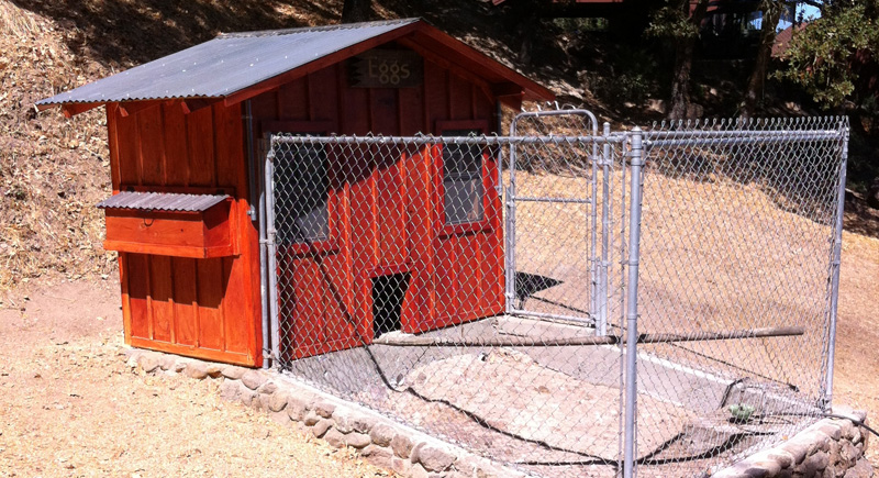 Get started raising chickens building your own coop for Hobby barn plans